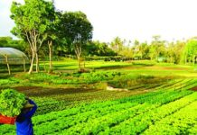 Agri farm-philippines - VillageConnectPh