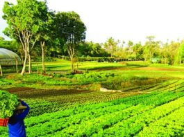 Agri farm-philippines - VillageConnectPh